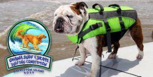 Watch Rad Rovers at Texas Surf Dog Competition!