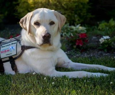 Sully the service dog starts new job at Walter Reed Medical Center