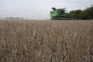 Soybean prices won't recover in 2020 regardless of China trade talks: economist