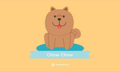 Woofpaper: Chow Chow