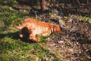 7 Ways To Stop Your Dog From Digging In Your Yard