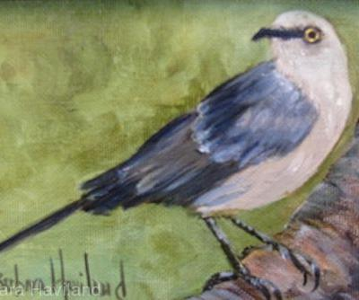 Mockingbird,miniature,oils canvas,Barbara Haviland-Texas Artist