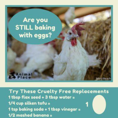 Think eggs are natural? Hens in the egg industry are