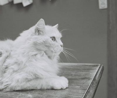 Matting in Cats | Winslow Animal Hospital Dog & Cat