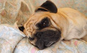 How To Prevent The Spread Of This Contagious Strain Of Dog Flu