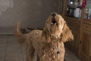 Does Your Dog Need More Mental Stimulation? Here Are 10 Signs!