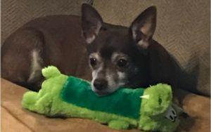 Social Media Users Help Old Dog Find His Favorite Discontinued Toy