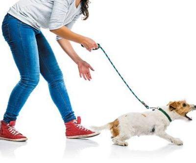 Do You Have a Stranger-Danger Dog? 4 Ways to Teach Him to Deal