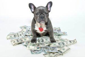 6 Top Tips for Living with Dogs on a Budget