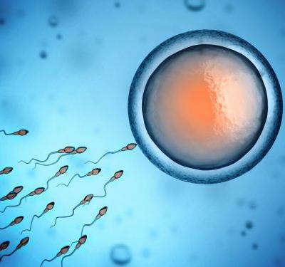 Coenzyme Q10 and L-carnitine may improve sperm health, review concludes