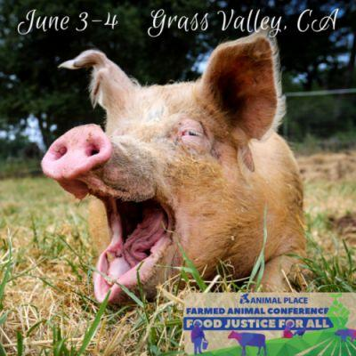 4 days until the first day of our Farmed Animal Conference