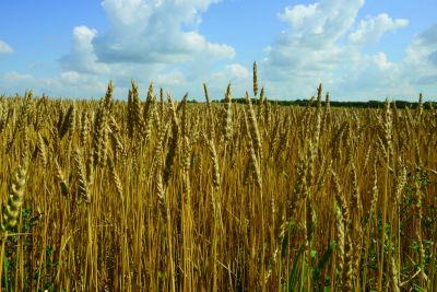 Syngenta, Bayer Try 'Open Innovation' to Find Next Big Agtech Idea