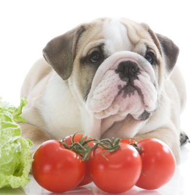 Can Dogs Eat Vegetables Like Celery, Tomatoes, and Cucumbers?