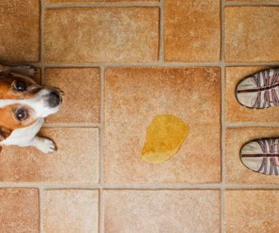 The Best Flooring for Dogs - and How to Protect Your Floors From Damage