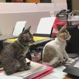 These 2 Kittens Seem to Be Very Taken With Tom & Jerry, and Hmmm, I Wonder Why?!