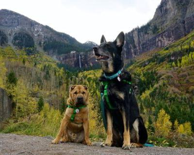 Colorado's Top Pet Friendly Attraction: Telluride Gondola