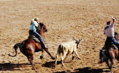 Cattlemen sue USDA in federal court over County of Origin Labeling