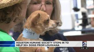 Humane Society Receives More Than 50 Dogs From Puppy Mill Bust