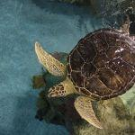 Rescued/Rehabbed Success Stories at the Minnesota Zoo
