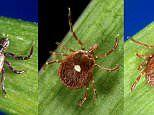 Tick-resistant clothing protects you from three species of the bug that carries Lyme disease