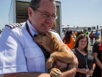 Southwest Airlines Just Flew A Cabin Full Of Animals Out Of Storm-Hit Houston