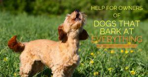 Help For Owners of Dogs That Bark at EVERYTHING