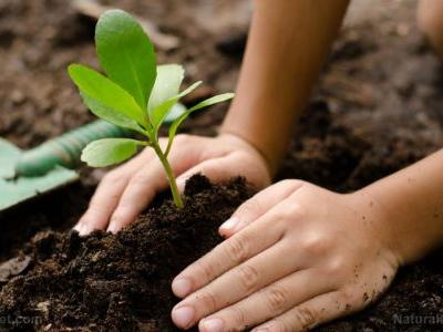 Growing for a better world: The 5 benefits of organic gardening