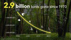 Vanishing: More Than 1 in 4 Birds Have Disappeared in the Last 50 Years