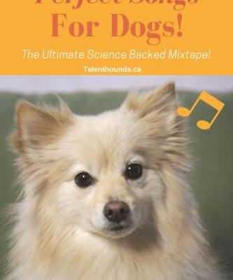 What Music will Relax Your Dog
