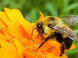 Bee venom 'dampens down a major driver of eczema'