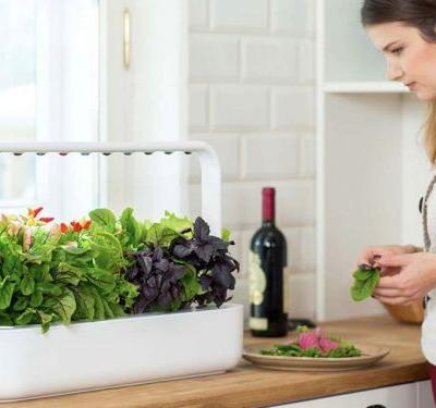 I grew basil and lettuce using this indoor smart garden - and the process was truly effortless