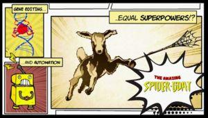 The Tale of the Captivating Researcher and the Spider Goat