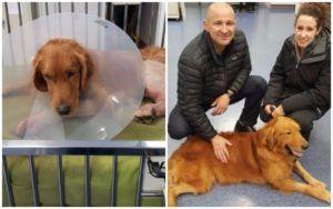 Dog Found Shot With Trap Stuck To His Leg Finally Gets His Happy Ending