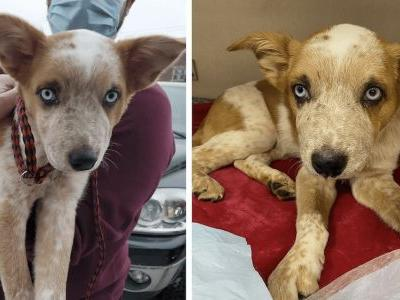 Abused Puppy With Broken Legs Saved After Being Thrown Into River