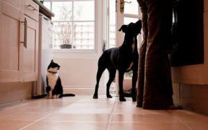 Not Ready To Go Raw? Try A Vet-Approved Homemade Pet Food Diet
