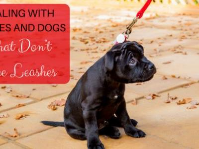 Dealing with Puppies And Dogs That Don't Like Leashes