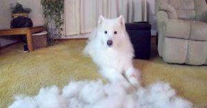 You'll Never Believe How Much Fur This Dad Brushed Off His Dog