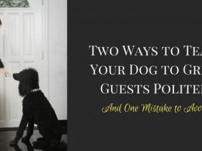 Two Ways to Teach Your Dog to Greet Guests Politely And One Mistake to Avoid