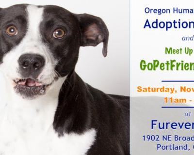 Pet Friendly Meet Up in Portland with GoPetFriendly