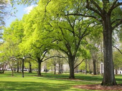 Green healing: People who live in leafy neighborhoods have a lower risk of developing heart disease