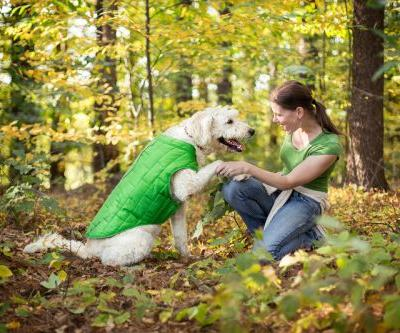 18 Dog-Friendly Fall Destinations in New England