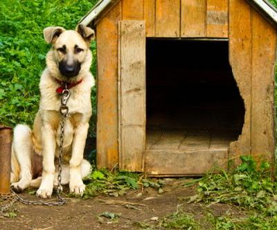 Dug Up at Dogster: Why I Am Against Tethering a Dog When You're Not Around