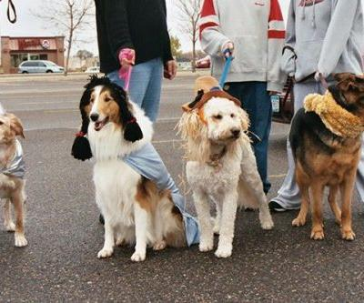 14 Ideas for Homemade Dog Halloween Costumes