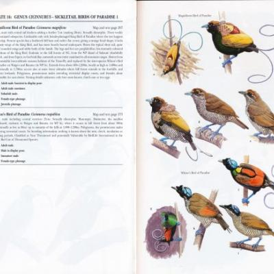 Birds of Paradise and Bowerbirds: An Identification Guide-A Book Review