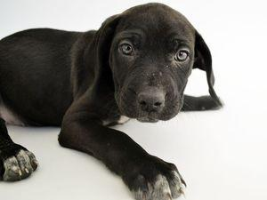 Your daily 6: Let's paws for National Puppy Day, Congress OKs $1.3 trillion budget and NYC firefighter killed in blaze on Ed Norton film set
