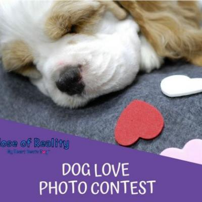 Be My Dog Valentine Photo Contest Winners 2018