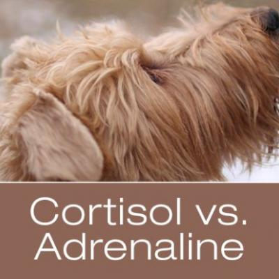 Dog Adrenal Hormones: What is the Difference between Adrenaline and Cortisol?