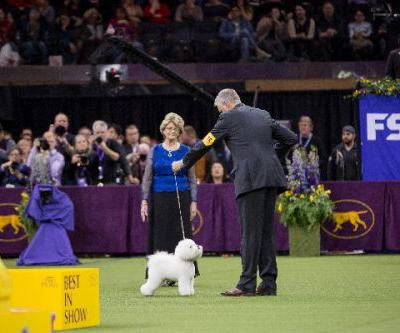Learn More About Westminster Kennel Club Best in Show Winner Flynn