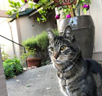 Sundays With Tabs the Cat, Makeup and Beauty Blog Mascot, Vol. 534