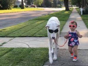 World Falls In Love With Little Girl and Her Special Needs Great Dane